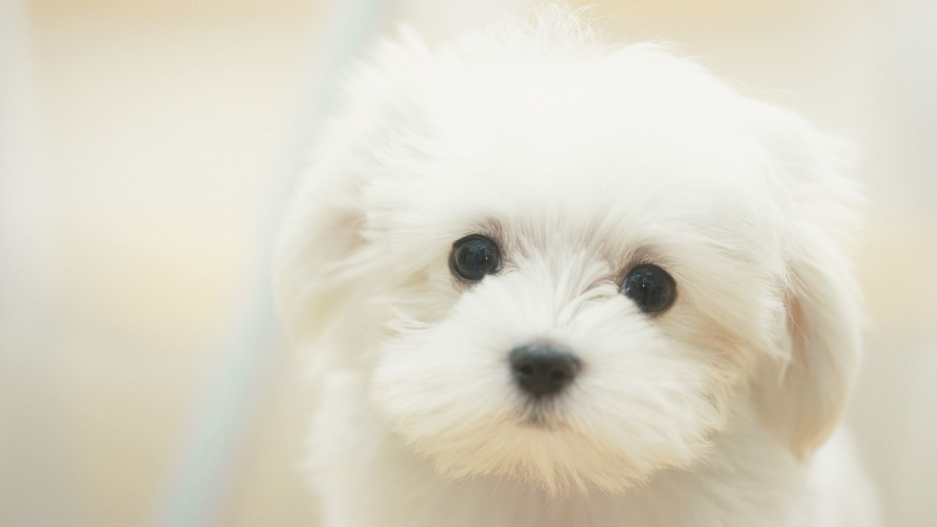 Best Puppy Wallpaper 1920x1080