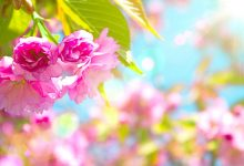 Wallpapers Spring Flowers